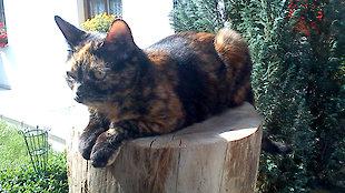Katze Garfield